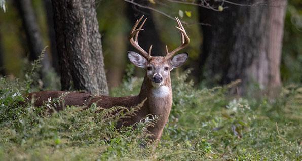 deer hunting ohio