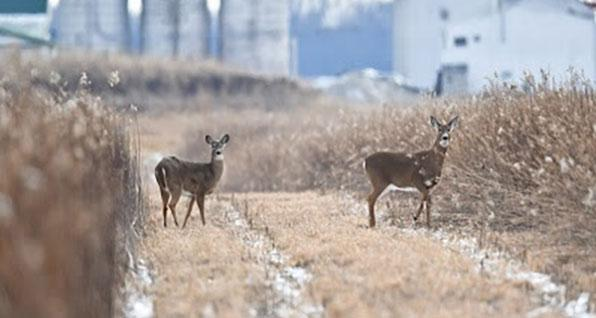New Program Connects Ohio Hunters with Participating Landowners
